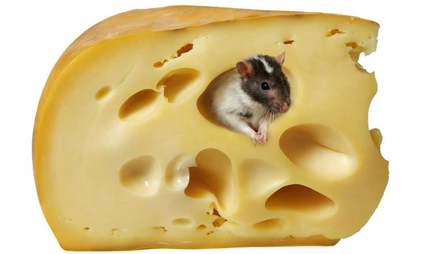 Хомяк и сыр
