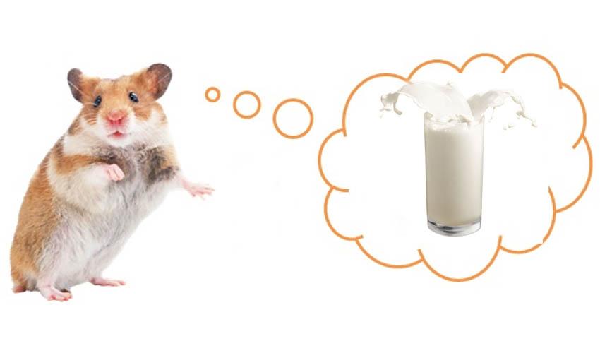 можно ли хомякам молоко