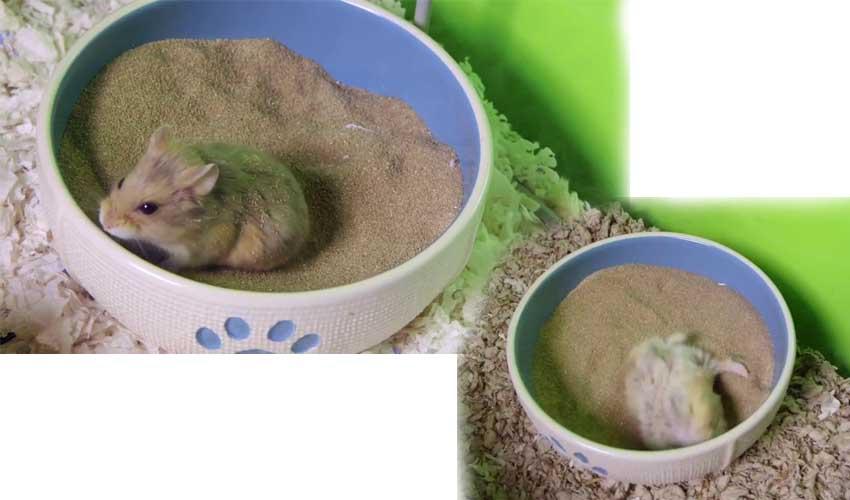 песок для хомяка