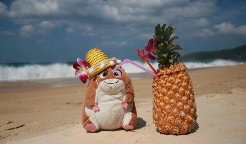 хомяк ананас