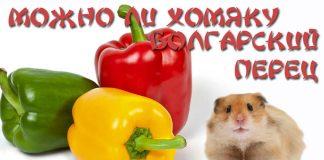 Можно ли хомякам болгарский перец