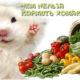 Чем нельзя кормить хомяков