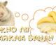 Можно ли хомякам банан