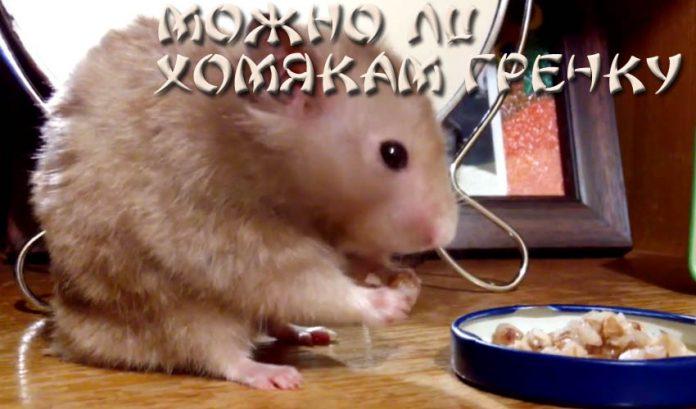 Можно ли хомякам гречку