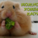 Можно ли хомякам капусту