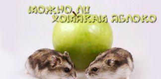 можно ли хомякам яблоки