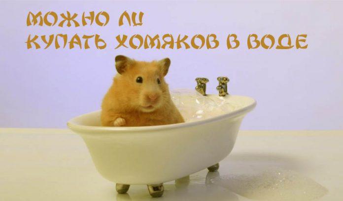 Можно ли купать хомячков