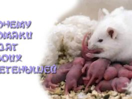 Почему хомяки едят своих детенышей