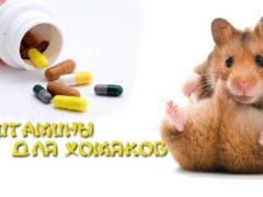 Витамины для хомяков