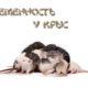 Беременность у крыс