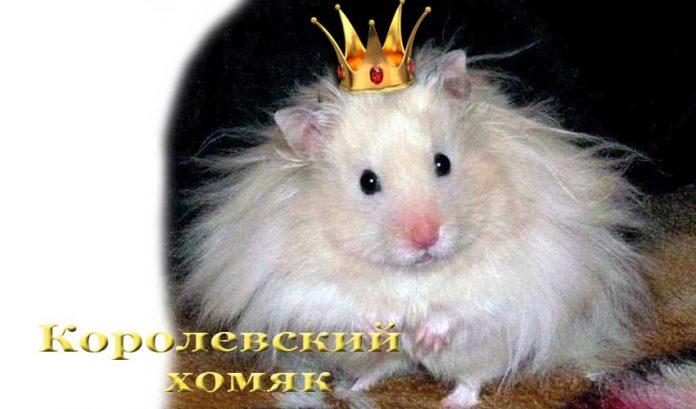 королевский хомяк