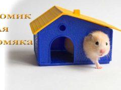 Как выбрать домик для хомяка