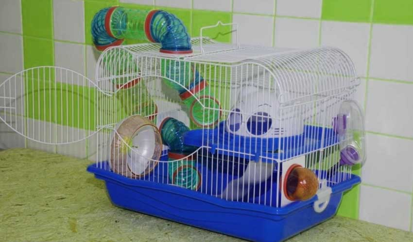 Клетка для джунгарского хомяка своими руками в домашних условиях 5