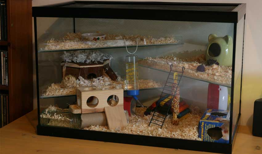 Обустройство аквариума для хомяка своими руками 95