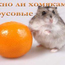 Можно ли хомякам мандарины, апельсины, лимоны