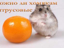 можно ли хомякам мандарины, апельсины пи другие цитрусовые