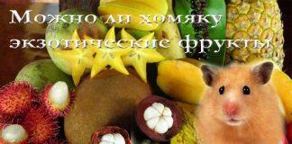 можно ли хомякам экзотические фрукты