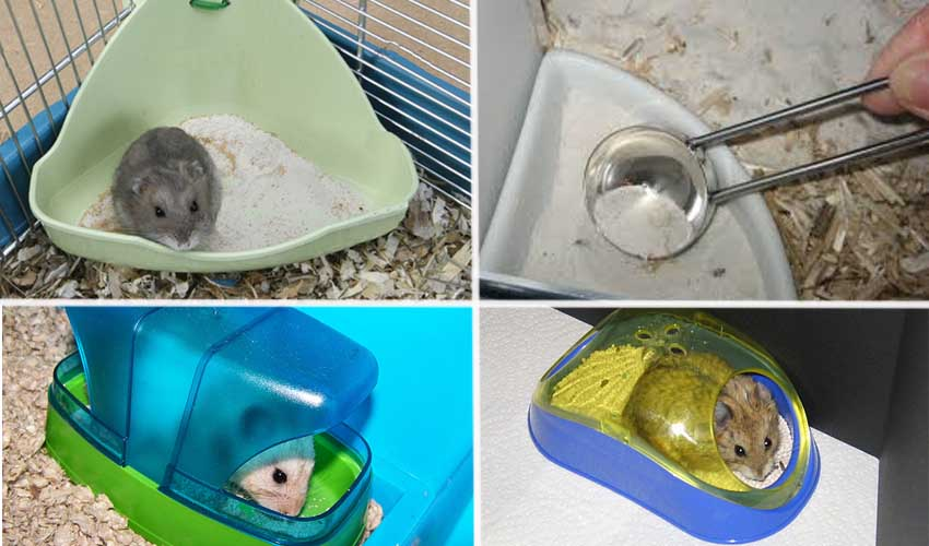 туалет для хомяка