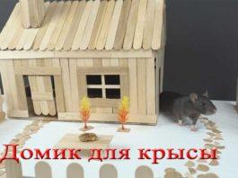 домик для крысы