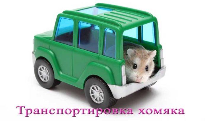 транспортировка хомяка
