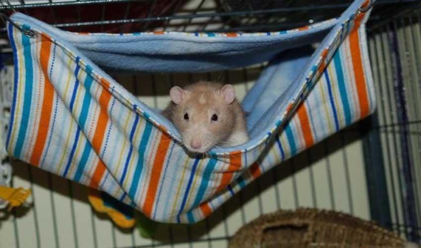 Вязаный гамак для крысы своими руками 63