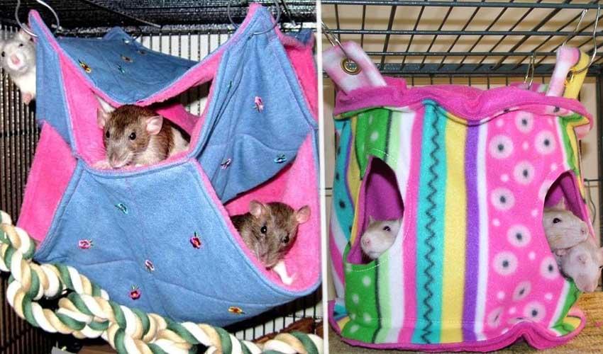 гамак для крысы