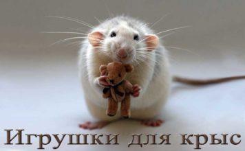 игрушки для крыс