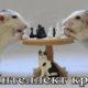 Интеллект крыс