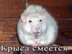 Как смеются крысы и почему они это делают