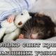 Сколько спят домашние крысы