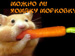 Можно ли хомякам морковь
