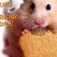 Можно ли хомякам печенье