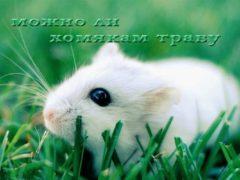 Можно ли хомякам траву