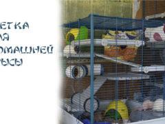 Как выбрать идеальную клетку для крысы
