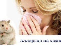 Аллергия на хомяка, симптоматика, причины возникновения
