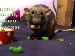 Какие овощи можно крысе и в каком количестве