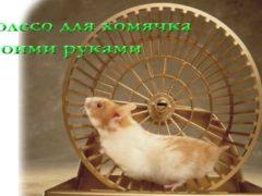Колесо для хомяка (делаем сами)