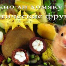 Можно ли хомяку кокос, киви, ананас, манго