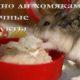 Можно ли хомякам молоко, творог, йогурт и другие молокопродукты